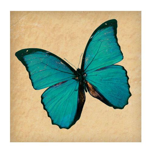 Бабочки и прочие насекомые