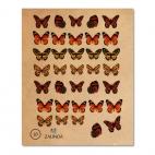 010 Бабочки_3